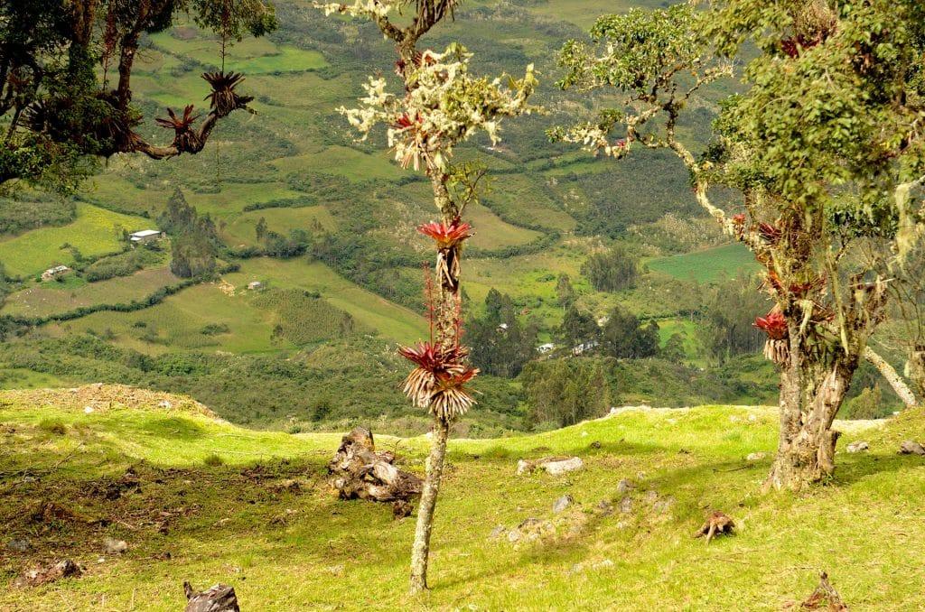 Magnifique vue de Kuélap.
