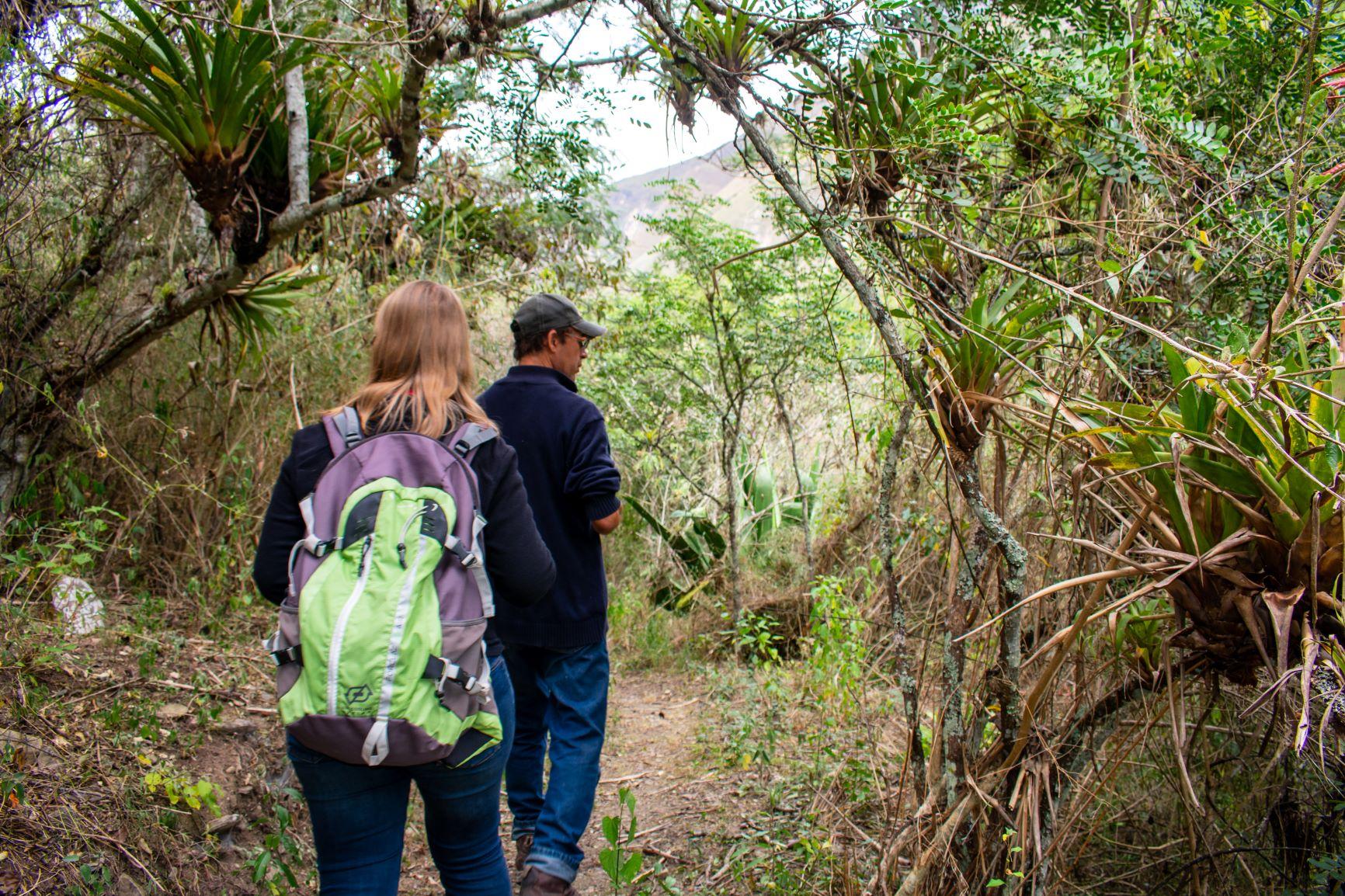 ACP Milpuj, reforestation nord du Pérou