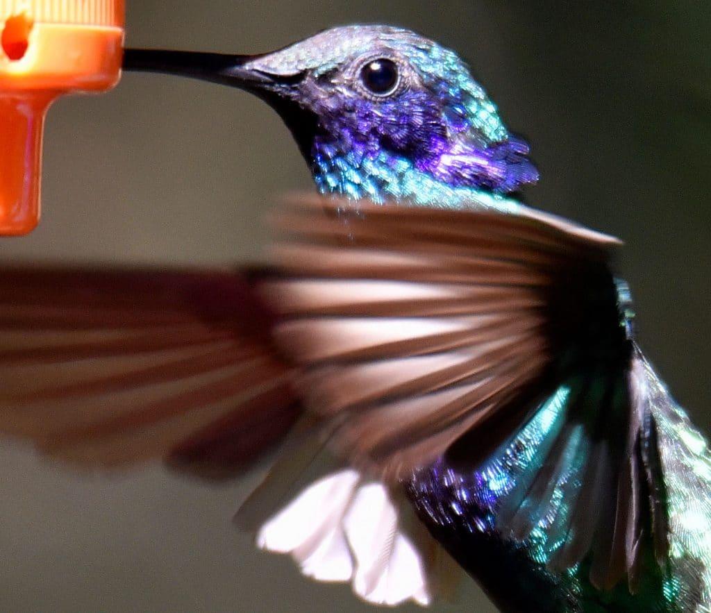 Vogelvielfalt Nord-Peru