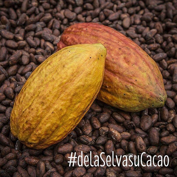 Fèves de cacao San Martin