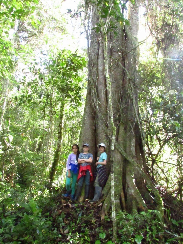 Big tree Huamanpata, Northern Peru