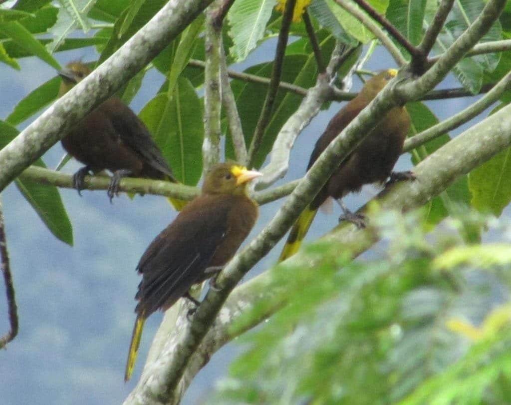 Oiseaux, réserve Aconabikh