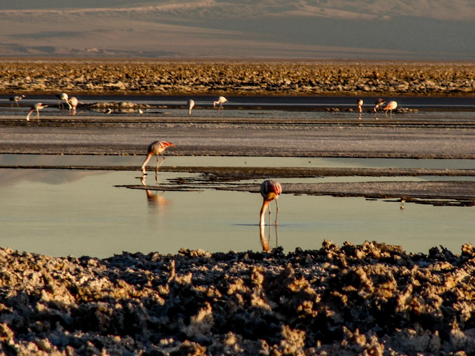 Atacama-Wüste Chile