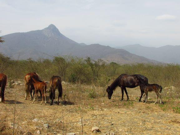 Chaparri reserve naturelle
