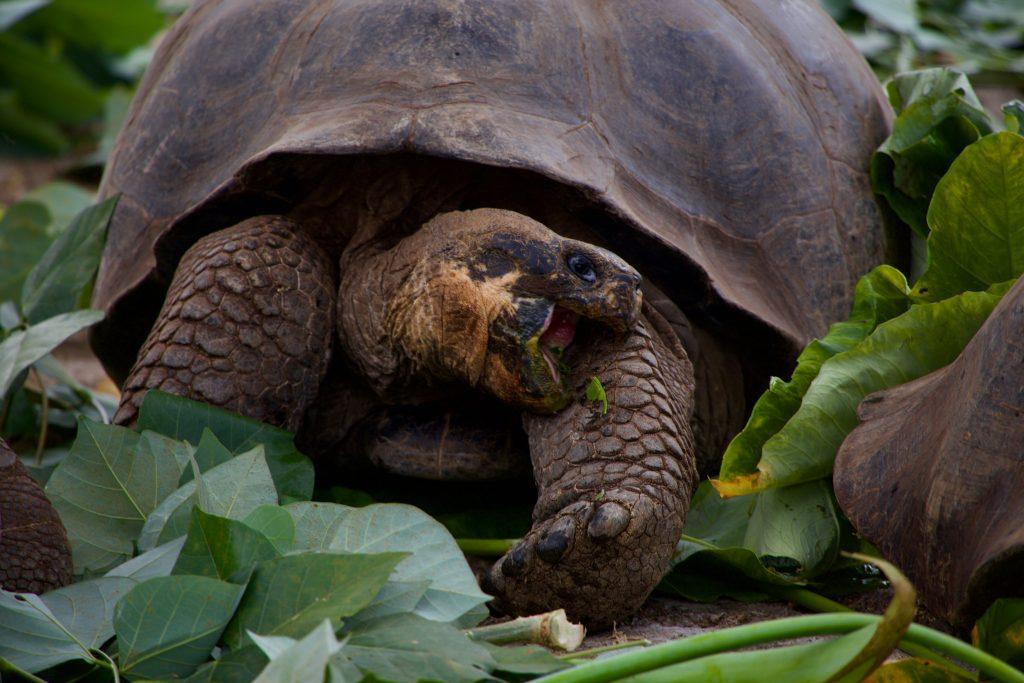 Einer der Top-Orte in Ecuador, die Galapagos-Inseln, ein Naturwunder